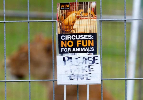 Ask Your MP to Bring In Long-Overdue Ban on Exotic-Animal Circuses!