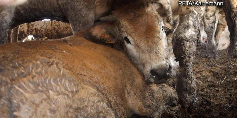 NZ Government Pressured to End Live Exports in Light of Suez Canal Crisis