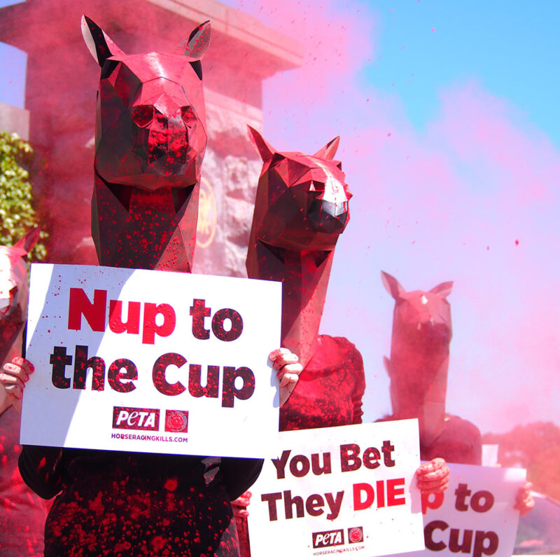 Protesters outside of Flemington ahead of Melbourne Cup.