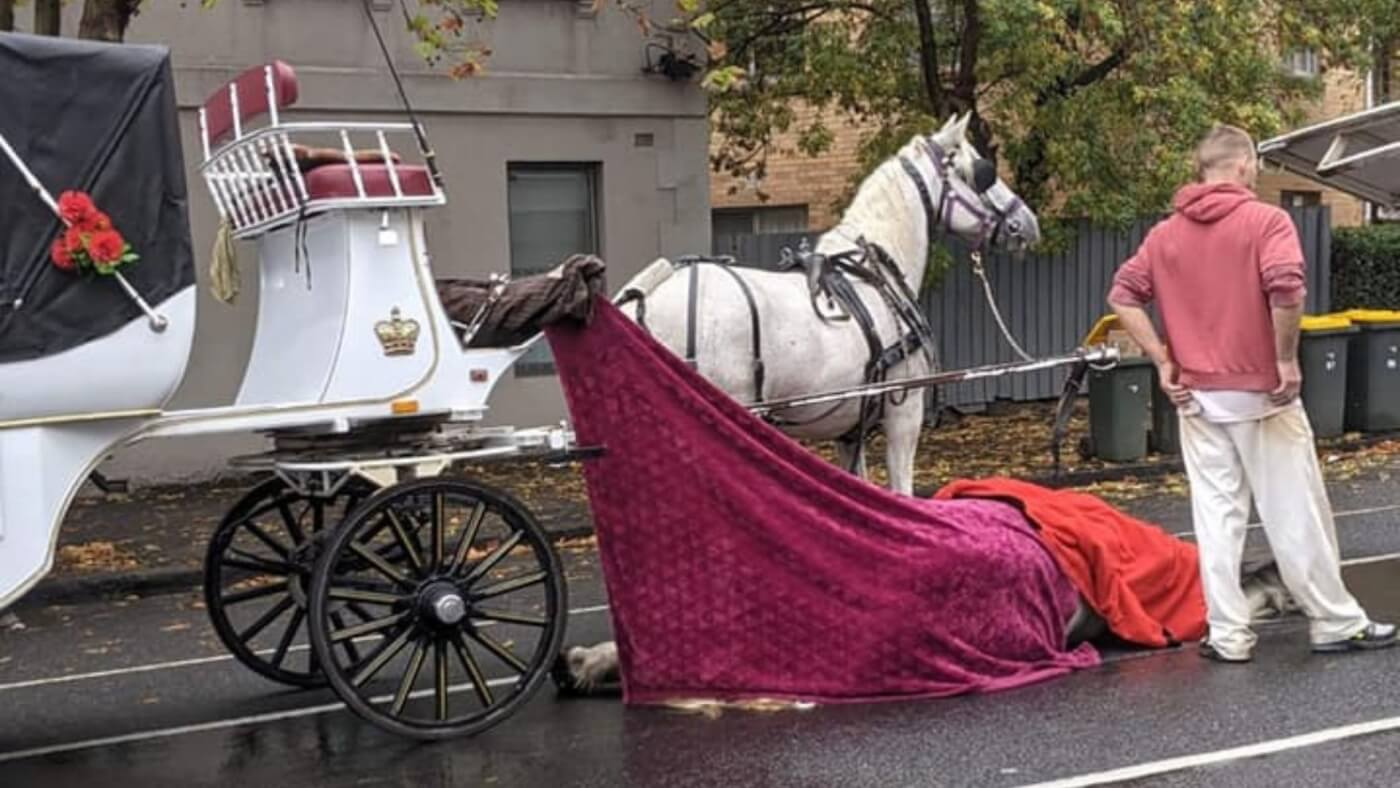 Horse Pulling Carriage Dies on Melbourne Street
