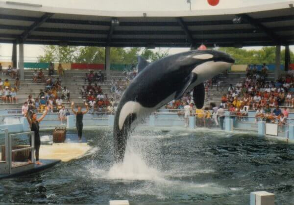 Help Lolita, the World's Loneliest Orca