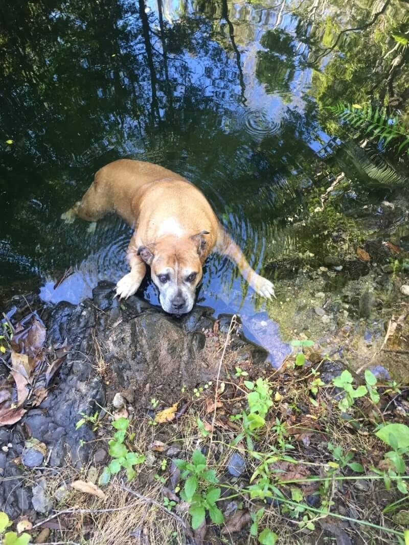 Missing dog rescued 2