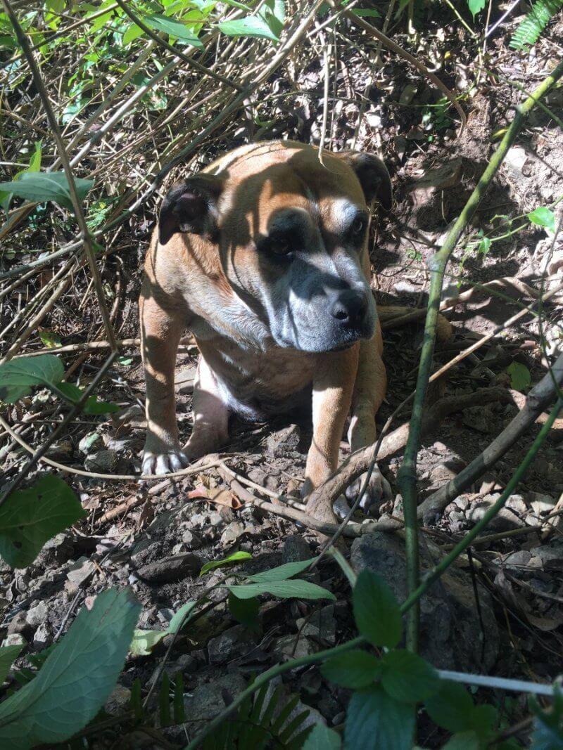 Missing dog rescued 3