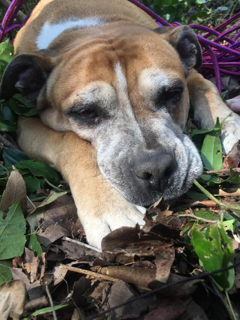Missing dog rescued 5