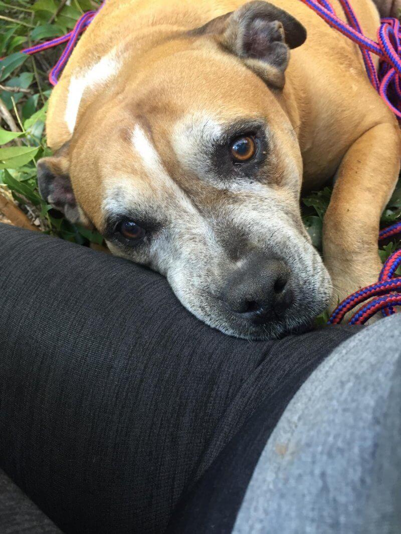 Missing dog rescued 6