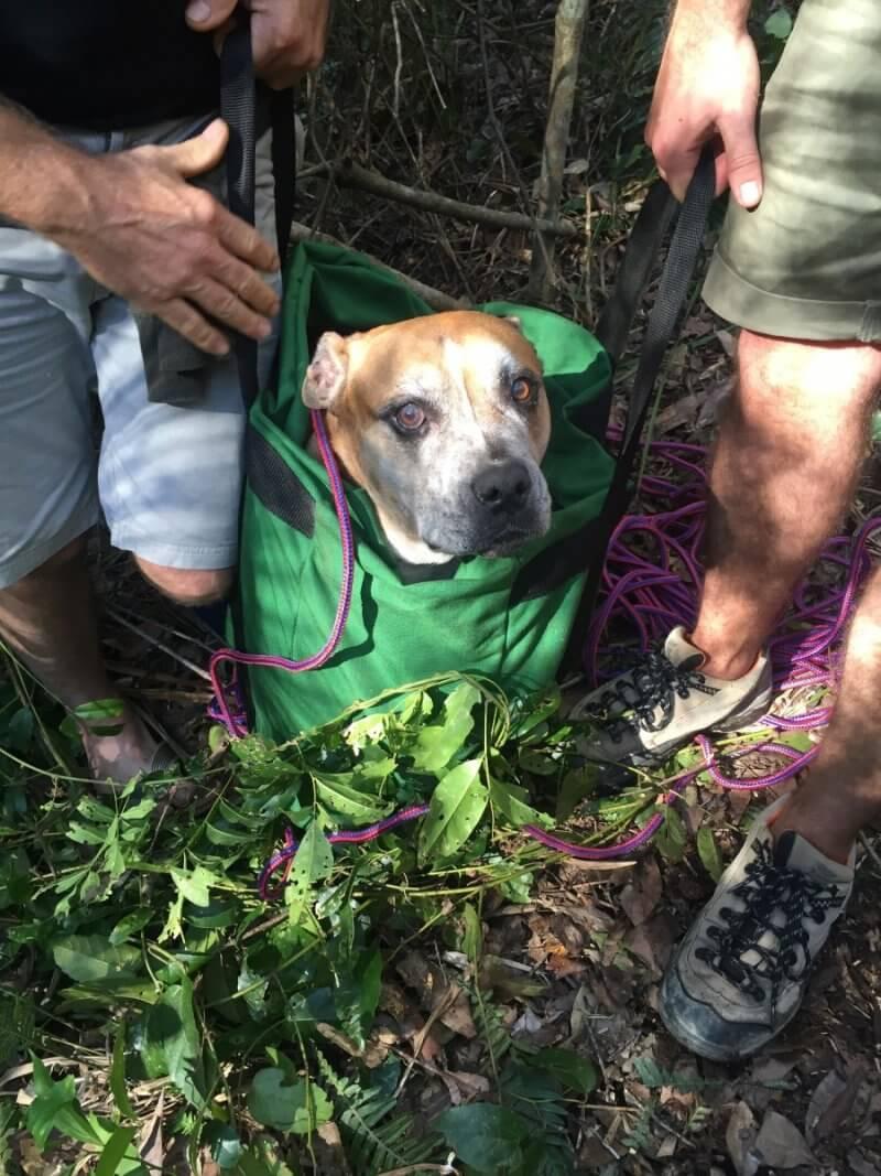Missing dog rescued 7