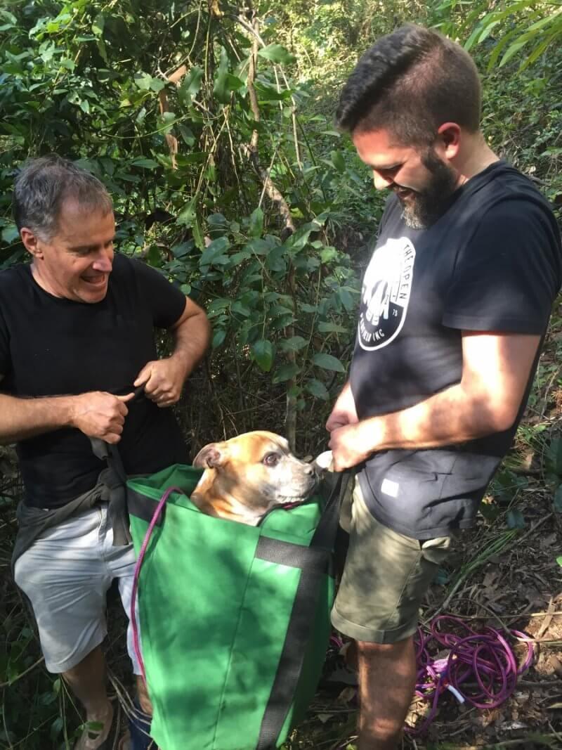 Missing dog rescued 8
