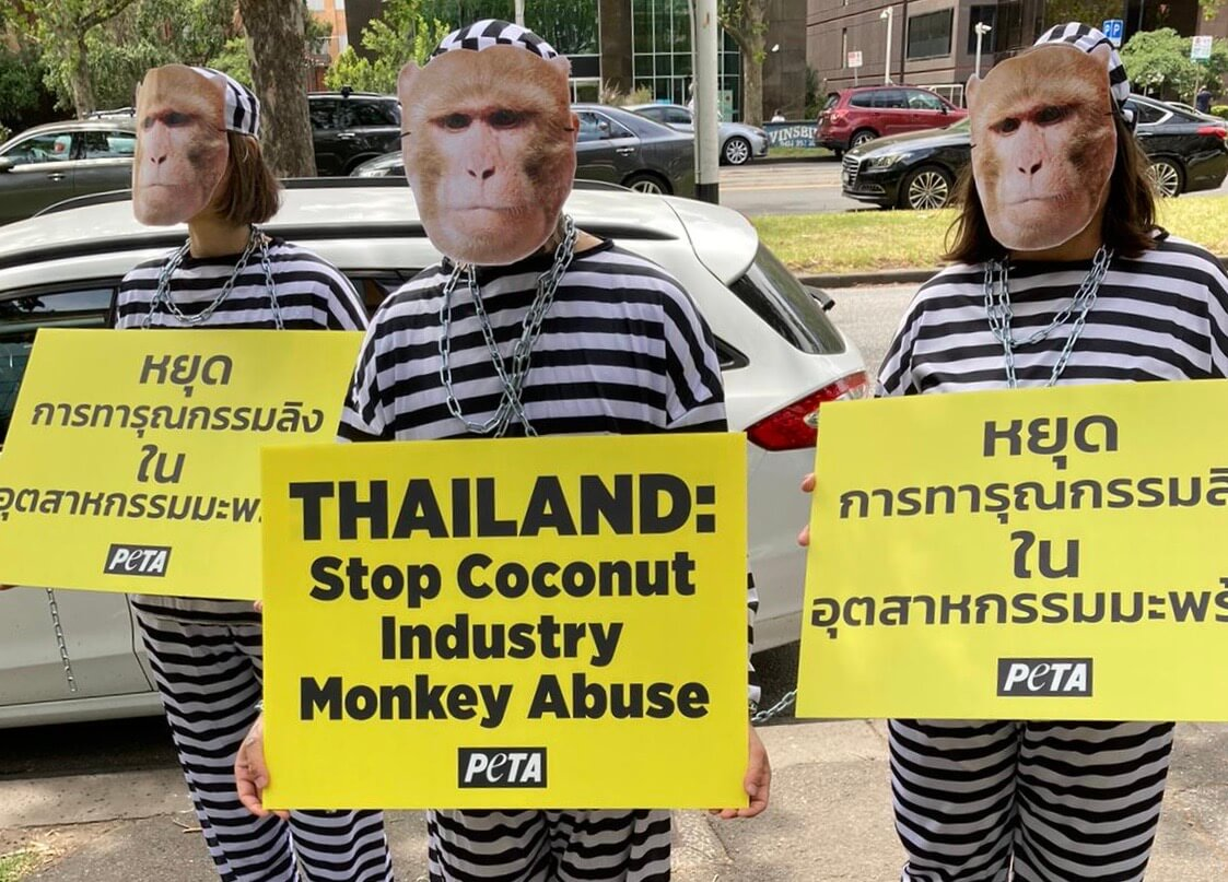 Activists protesting monkey labour in Thailand's coconut industry.