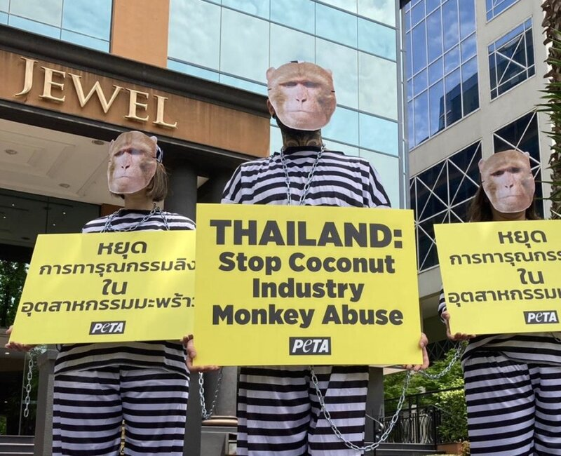 PETA protesters dressed as monkeys outside the Thai consulate in Melbourne.