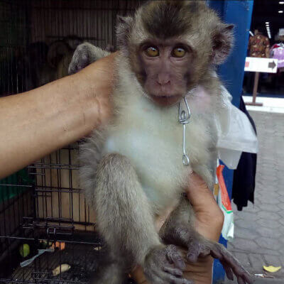 A monkey being held by a vendor at a live animal market.