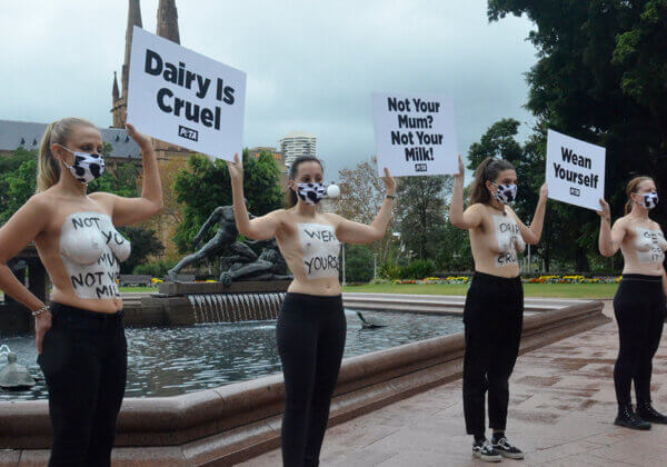 PETA protesters in Sydney for Mother's Day.