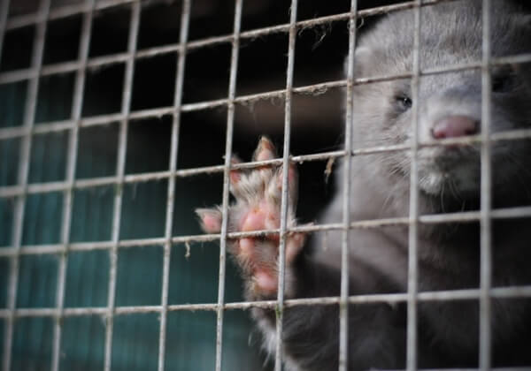 Cruelty-Free Fashion: Aussie Designers Shun Fur and Angora