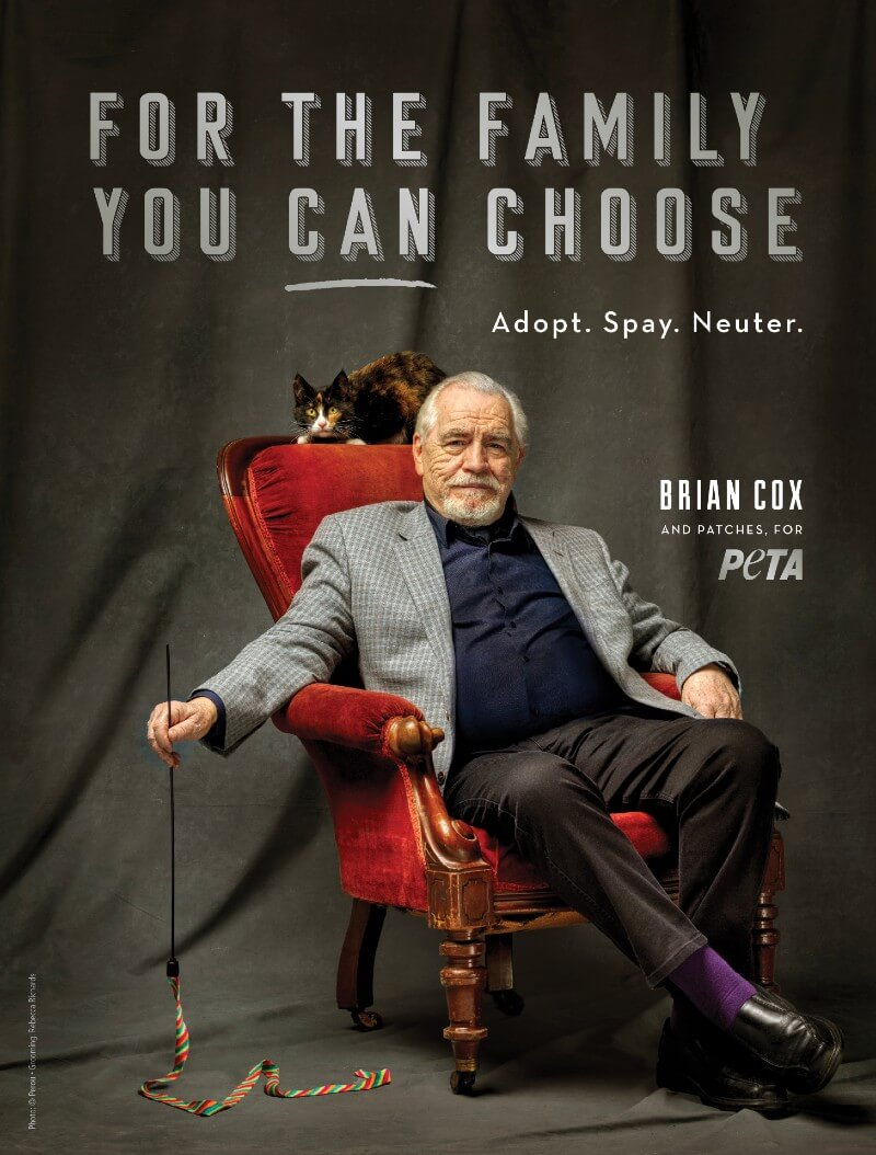 Brian Cox 'Interviews' Rescued Cat