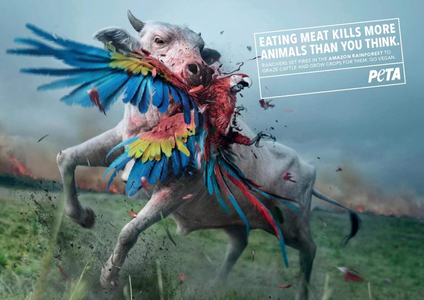 Eating Meat Kills The Amazon
