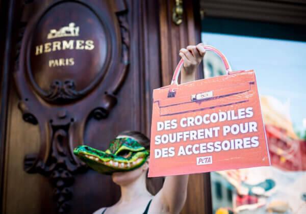 Australian Crocodile Farm Footage Sparks International Protests