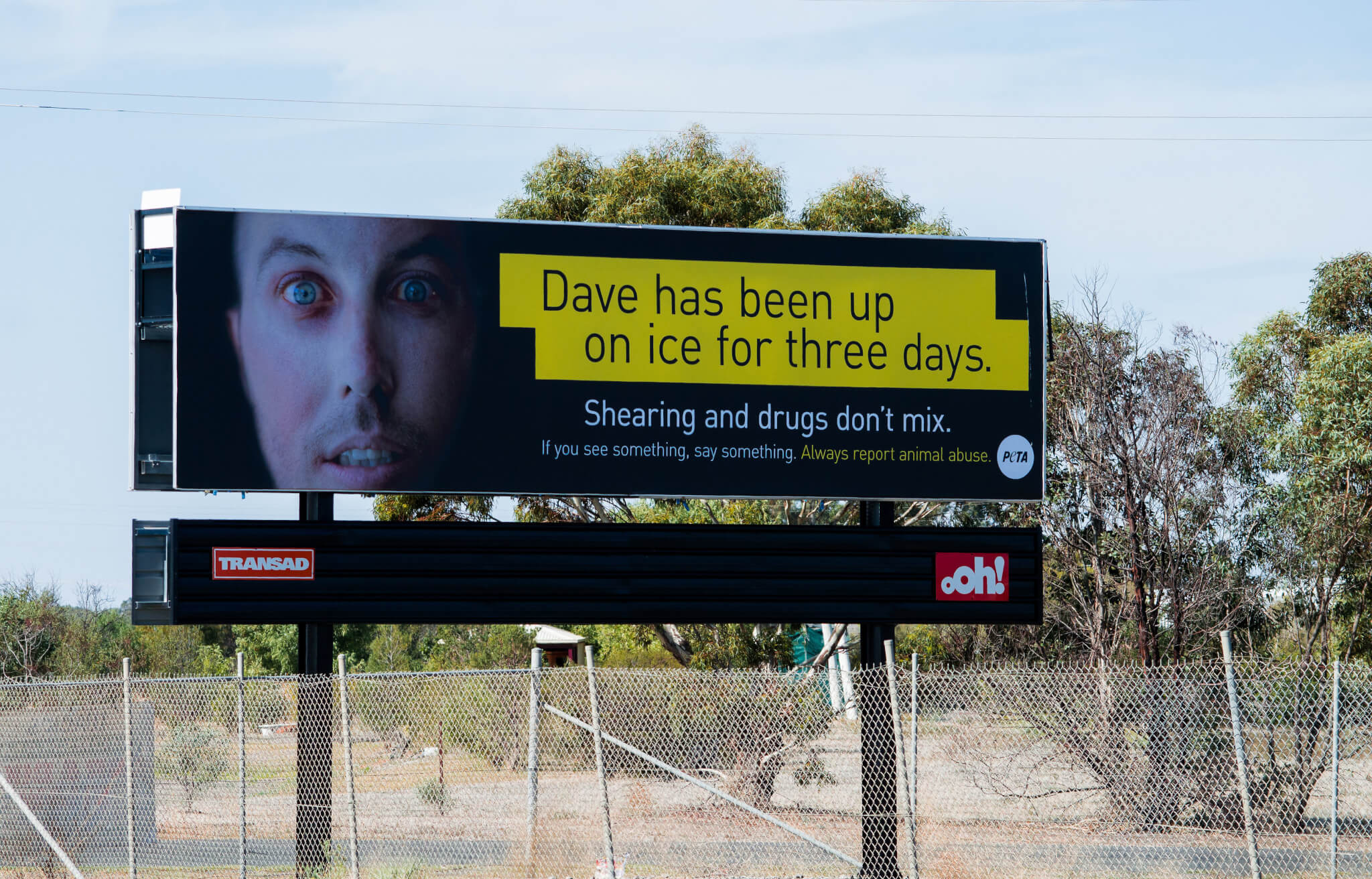 Billboard Urges Shearers To Report Drug Use Ahead Of Cruelty To