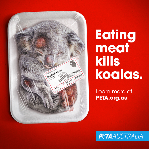 """A photoshopped image of a dead koala in a meat tray with the text """"Eating Meat Kills Koalas""""."""