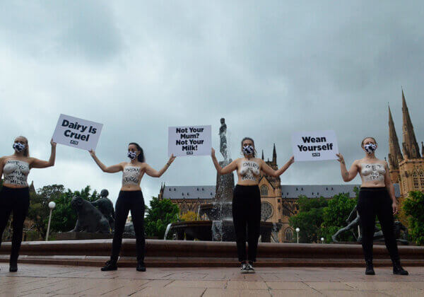 Activists in Sydney protest the dairy industry