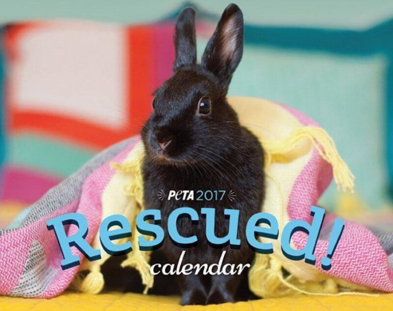 PETA Rescued calendar 2017