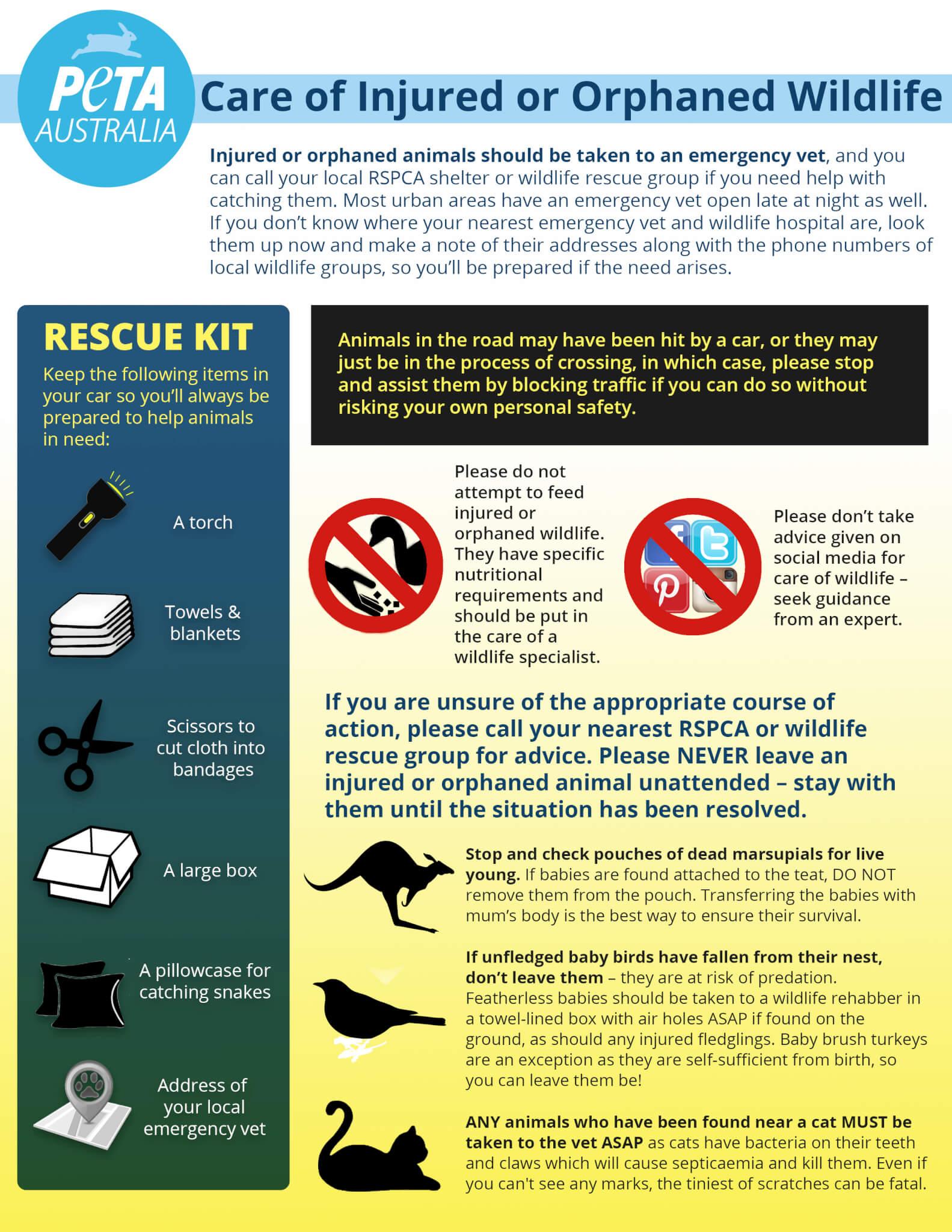 PETA Australia Injured Wildlife Infographic