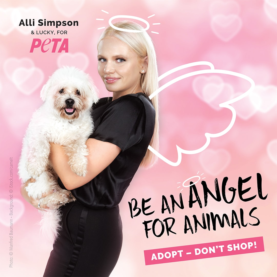 Alli Simpson Is an Angel for Animals!