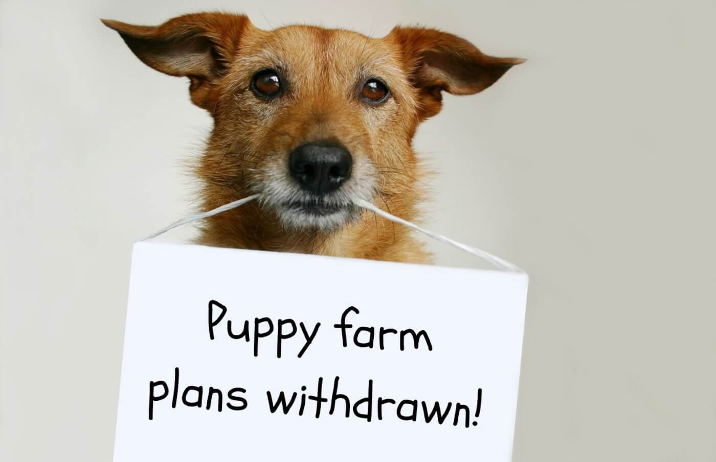 """a dog holding a sign in his mouth that reads """"puppy farm plans withdrawn"""""""