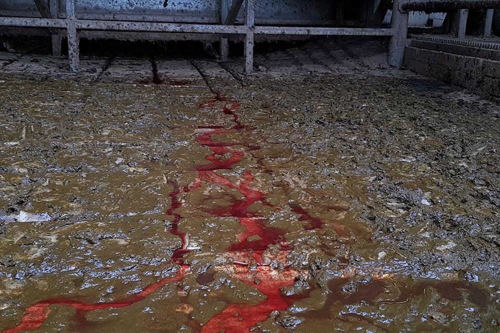 A photo taken at Picton Meatworx, Wollondilly abattoir.
