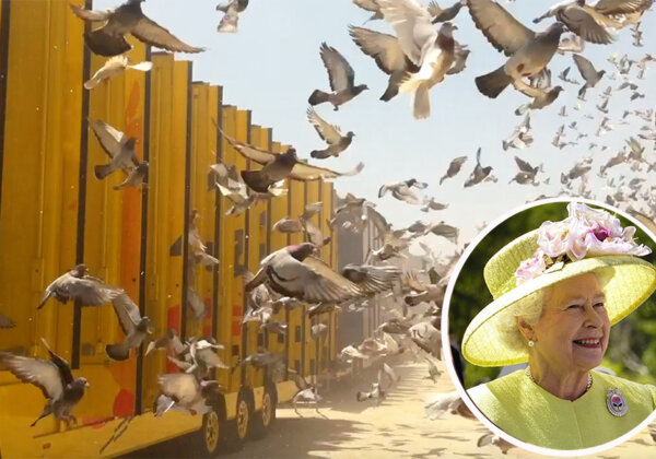 Breaking Investigation: Queen's Pigeons Perish in South African Million Dollar 'Slaughter Race'
