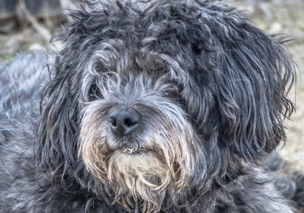 Dogs Dumped in Forest by Suspected Puppy Mill Operator