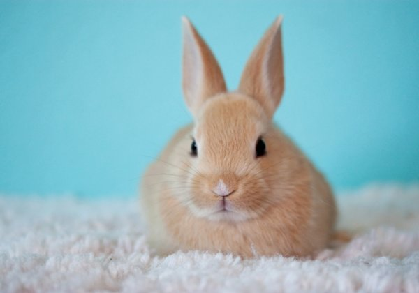 China Proposes End to Tests on Animals for Many Imported Cosmetics