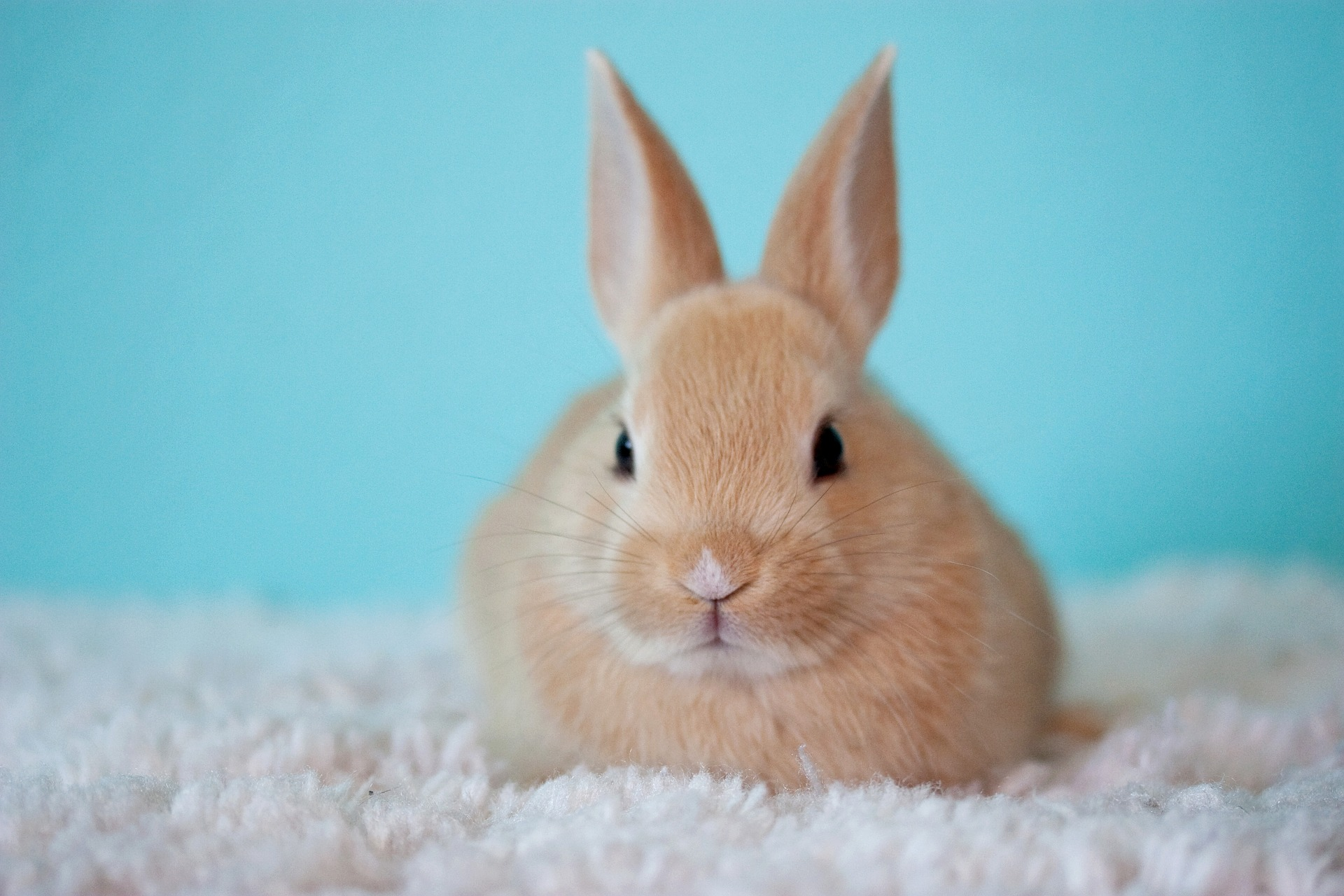Breaking: China Greenlights New Non-Animal Cosmetics Tests