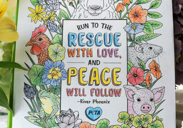 Get Creative With These Beautiful Animal Rights Colouring Pages