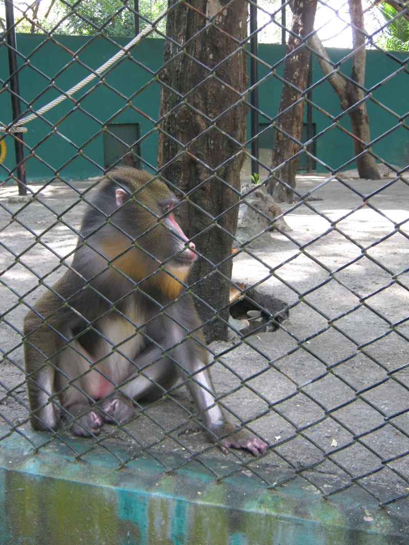 Zoos Are Not Conservationists