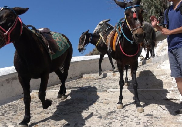 New Footage From Santorini: Donkeys and Mules Are Still Being Abused!