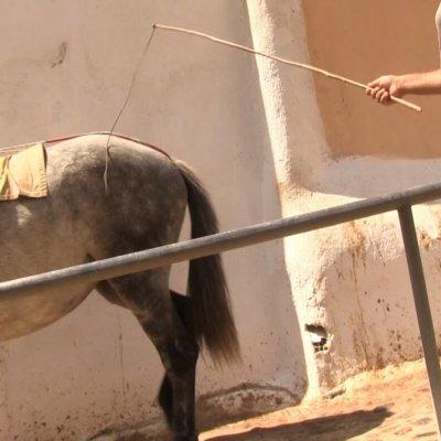 Animal abuse in Santorini.