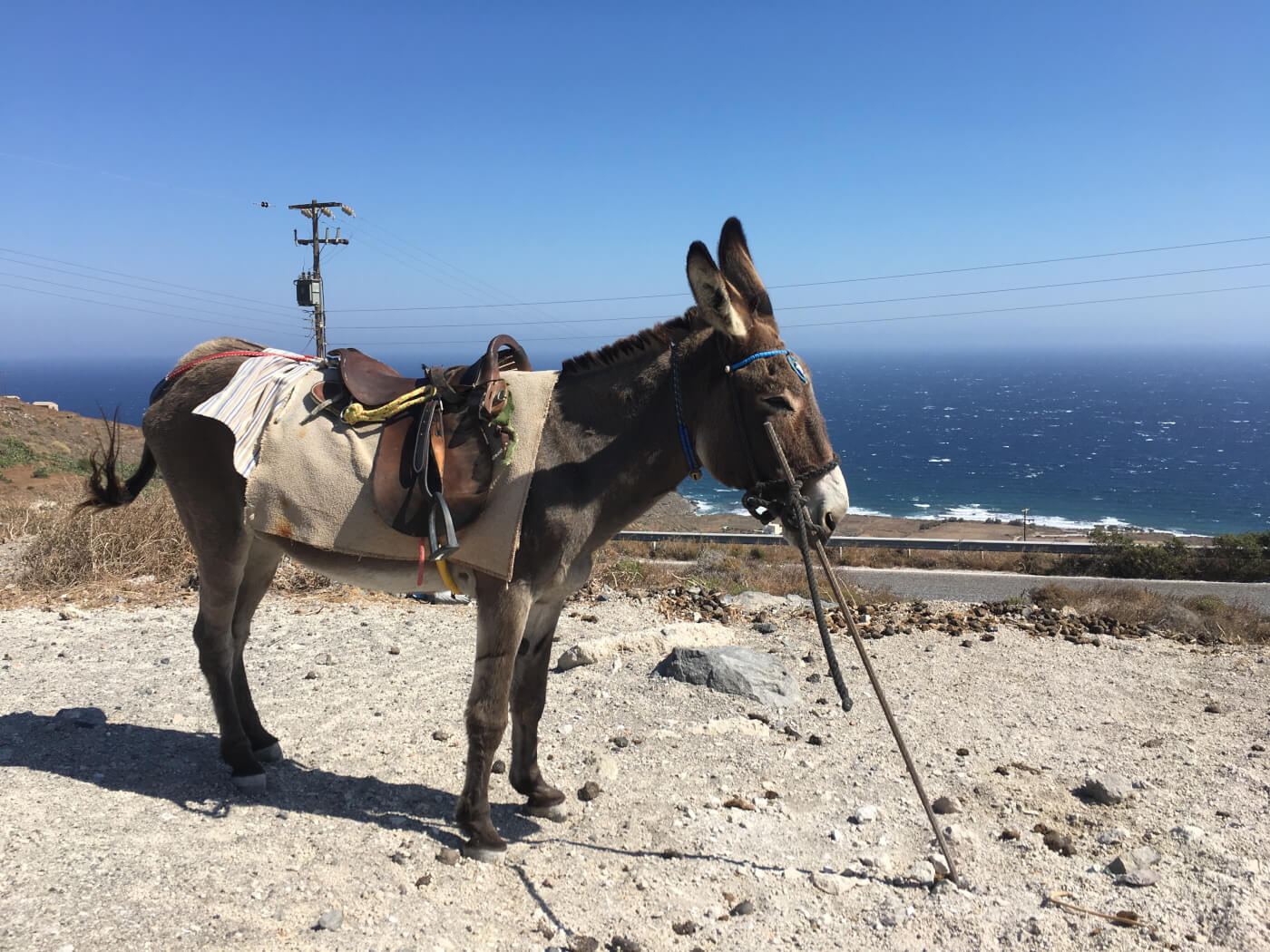 Donkeys and mules are forced to wait in the hot sun at Santorini.