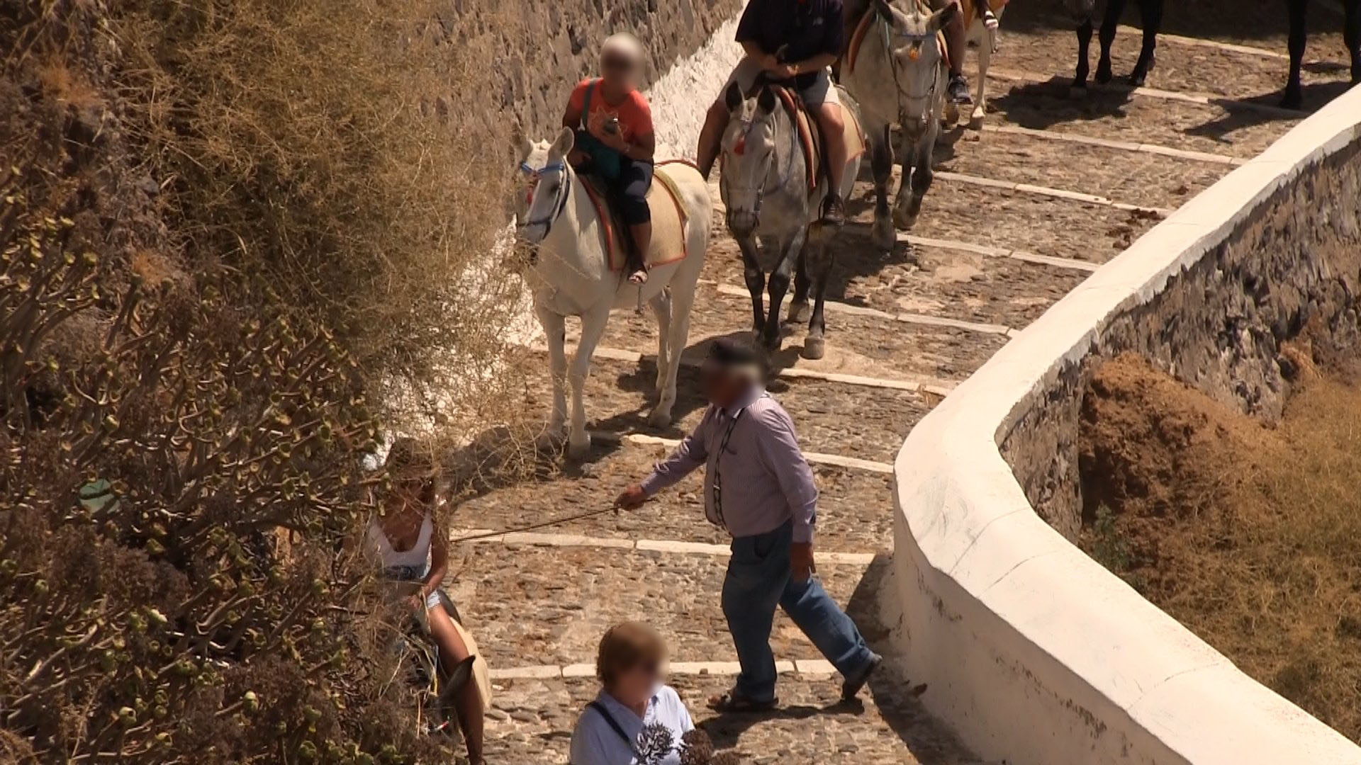 Eyewitnesses documented several situations in which walkers were forced to one side or almost pushed over or trampled by donkeys and mules.