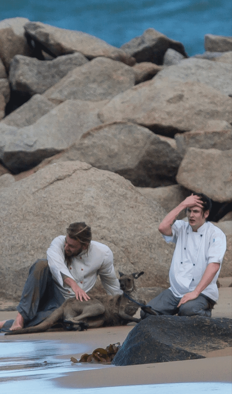 chefs save kangaroo