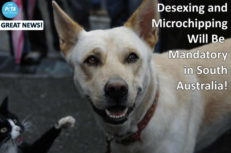 South Australia mandatory desexing