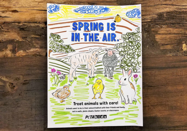 Spring Colouring Page