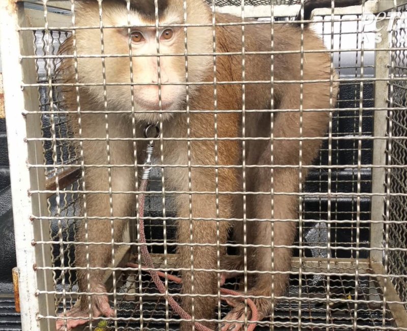 A photo of a monkey in a small cage.