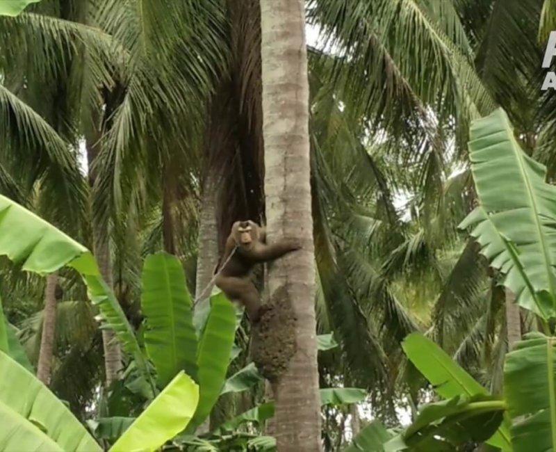 A photo of a monkey climbing a tree.