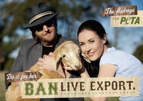 The Audreys, LIve Export Ad