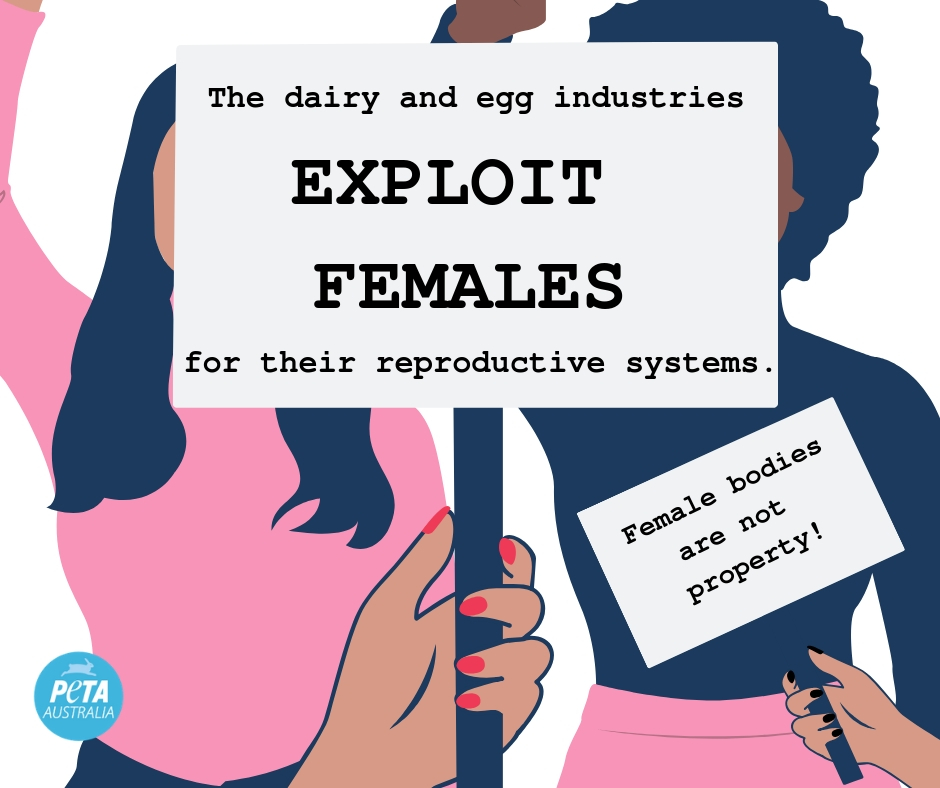 The dairy and egg industries exploit females for their reproductive systems.