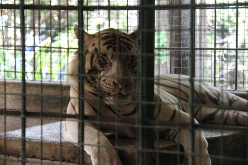 Tiger Asia