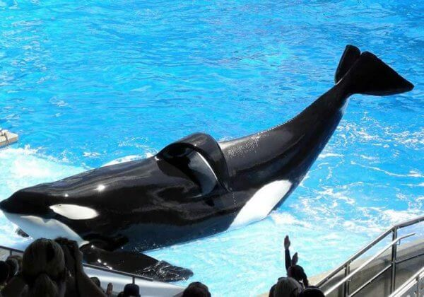 In Death, Tilikum Is Finally Free