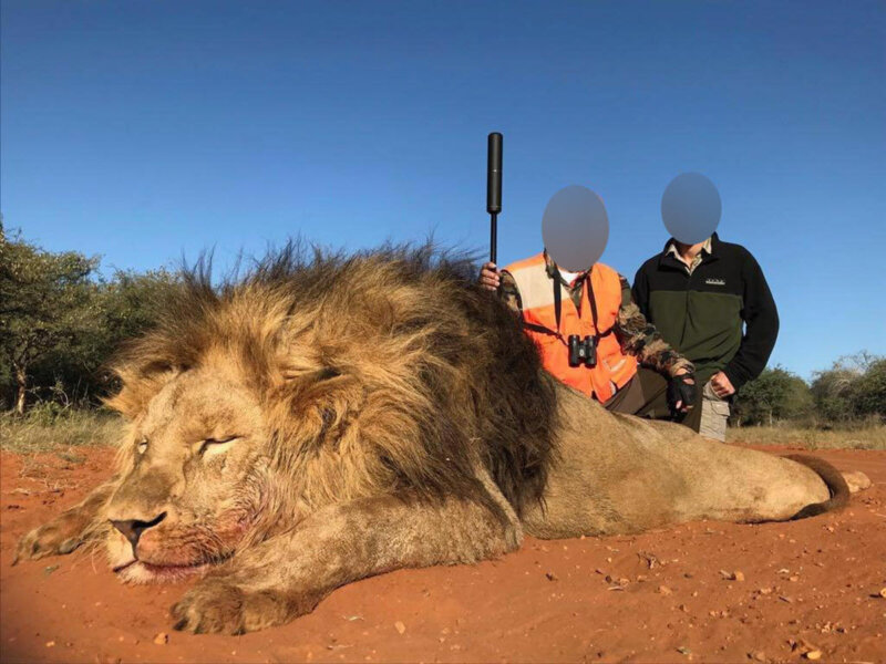 Image shows hunter with dead lions