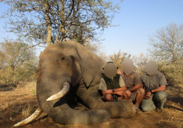 Image shows hunter with dead elephant