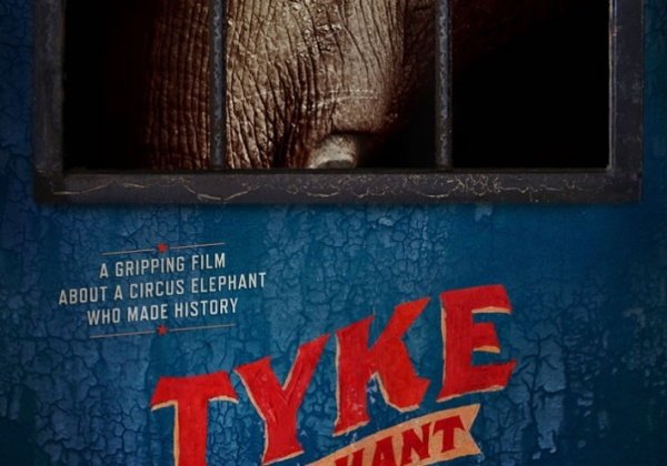 A Must-See Film: 'Tyke Elephant Outlaw'