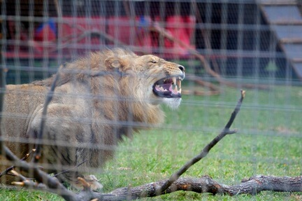 Tell State Premiers to Ban Wild-Animal Circuses!